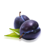 plum_01.png